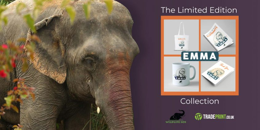 World Elephant Day The Emma Collection at Tradeprint